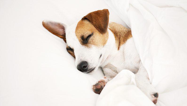 stress hund behandling
